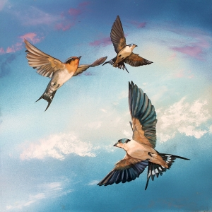 The Art of Riding on the Wind No. 1 Welcome Swallows a