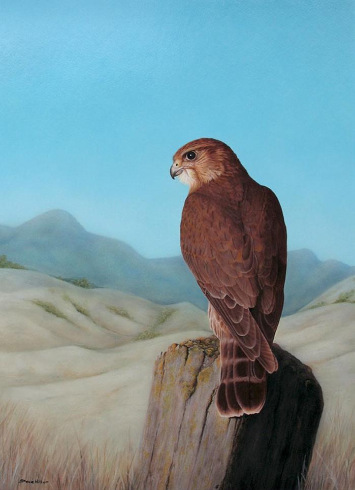 Hillier, S. Hawk