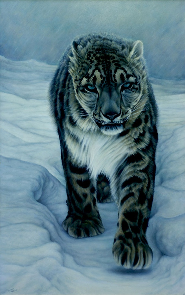 Hillier S. Snow Leopard