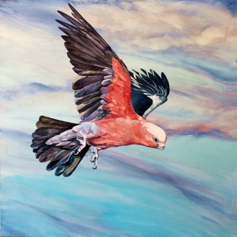 Susan Skuse | The Art of Riding on the Wind - Galah | Oil and Acrylic on composite aluminium panel | 300 x 300mm image size | $400