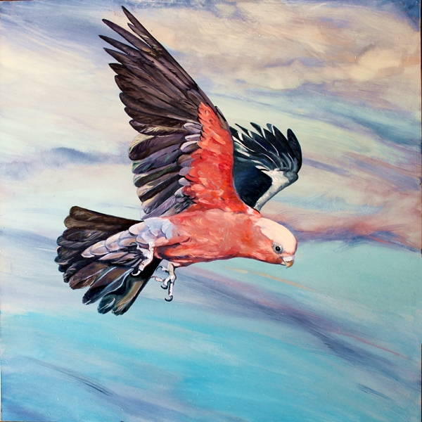 The Art of Riding on the Wind No. 9 Galah.web